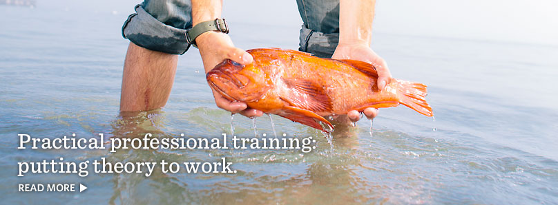 Practical professional training: putting theory to work.